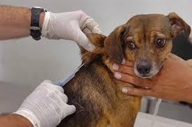 Foto vacinação antirrábica 1