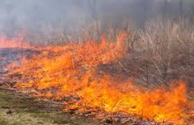 Foto queimadas 1