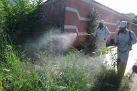 Foto dengue em MG