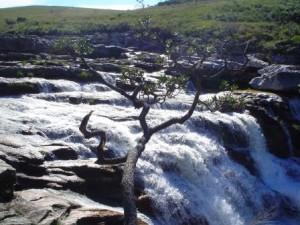 cachoeira-casca-danta-en-sao-roque-de-minas-minas-gerais-parque-nacional-da-serra-da-canastra_c05dbf313d0656383be86ca191c3f2aa_1000_free