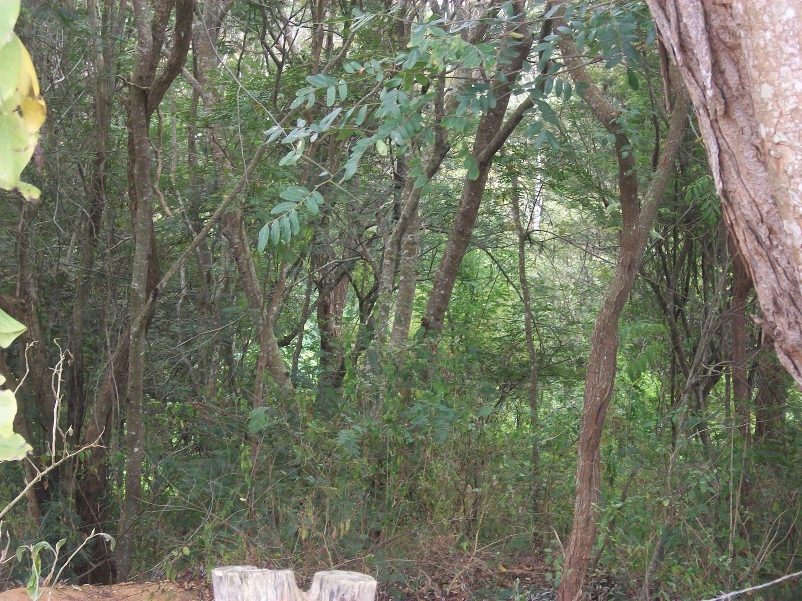 AREAS DE PROTEÇÃO AMBIENTAL DE MG66761