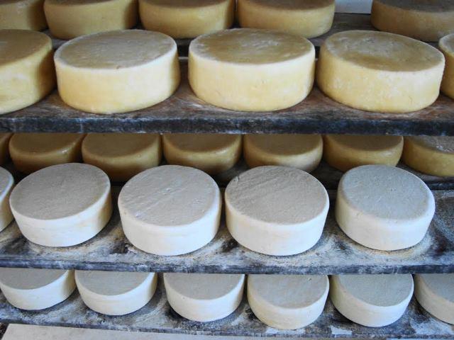 concurso de queijo