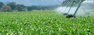millho_irrigação