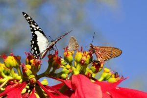butterflies-55052_1280